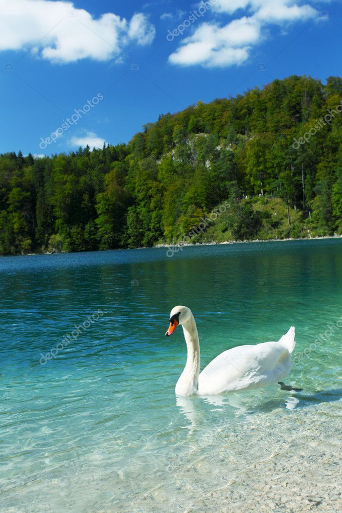 Alps lake and white swan — Stock Photo #10492051