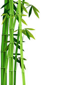 Bamboo on white — Stock Vector