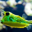 Exotic yellow fish - Stock Photo