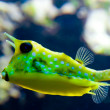 Exotic yellow fish — Foto de Stock