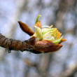 Tree twig with bud — Stock Photo