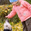 Little girl playing with dog in autumn park — Stock Photo