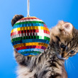 Cat playing with disco ball — Stockfoto