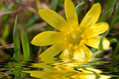 Yellow flower close-up background — Stock Photo