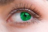 Beautiful woman green eye — Stock Photo