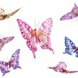 Collection of handcrafted butterflies — Stock Photo
