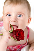 Funny looking little girl with rose — Stock Photo