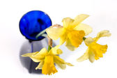 Blue vase with yellow narcissi — Stock Photo