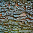 Stock fotografie: Bark