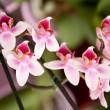Stock Photo: Beautiful colorful orchids