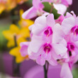 Beautiful purple orchids flowers — Zdjęcie stockowe