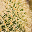 Cactus with long thorns — Stock Photo #10185417