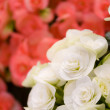 Beautiful roses closeup background — Photo