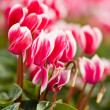 Beautiful red flowers macro — Stockfoto