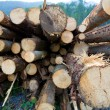 Stock Photo: Timber logs