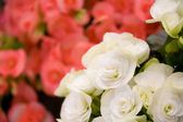 Beautiful roses closeup background — Zdjęcie stockowe