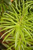 Grön tropic växt — Stockfoto