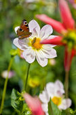 Flower with butterfly and bee inside — Foto Stock