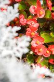 Beautiful flowers background — Stock Photo