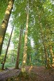 Floresta — Foto Stock
