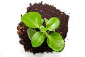 Green plant from top view — Foto Stock