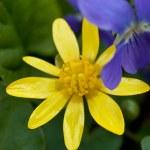 Yellow flower over green grass — Stock Photo