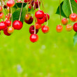 Cherry — Stock Photo #10370957