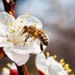 First bee — Stock Photo #10371008
