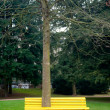 Bench with high tree — Foto Stock