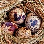 Bird's nest with four eggs — Stock Photo