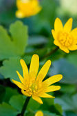 Yellow flower over green grass — Photo