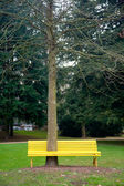 скамейка с высоким деревом — Стоковое фото
