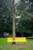Bänk med höga träd — Stockfoto