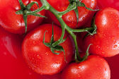 Ripe red tomatoes on red plate — Stock Photo