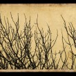 Branches on vintage photo paper — Stock Photo