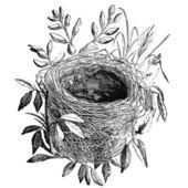 鸟鸟巢复古插画 — 图库照片