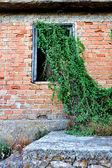 Plant groeit door raam — Stockfoto