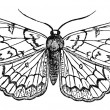 Butterfly vintage illustration — Foto de Stock