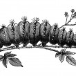 Caterpillar vintage illustration — Stock Photo