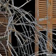 Tangled branches and broken window shutter — Стоковая фотография
