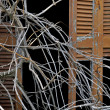 Tangled branches and broken window shutter — Stockfoto