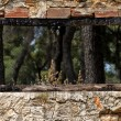 Burned window frame forest view — Stock Photo #9539639