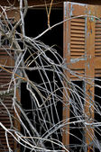 Tangled branches and broken window shutter — Stock Photo