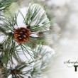 Pine tree — Stock Photo #9368681