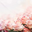 Roses Bouquet — Foto Stock #9671614