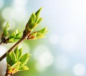 Green Bud — Stock Photo