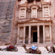 Stock Photo: Camels in Petra
