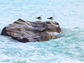 Tasmanovo moře — Stock fotografie