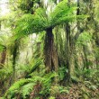 Stock Photo: Fern tree