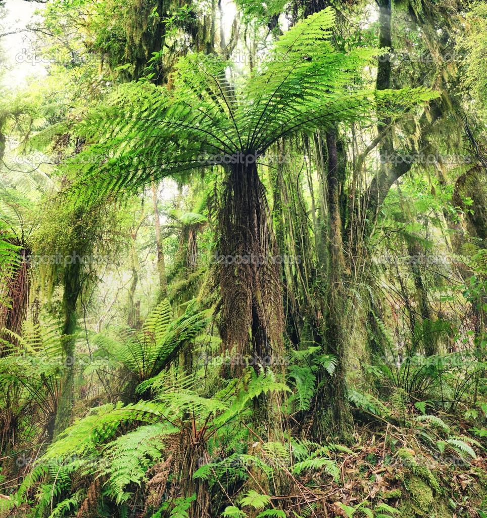 The New Zealand tree fern — Stock Photo #9335042